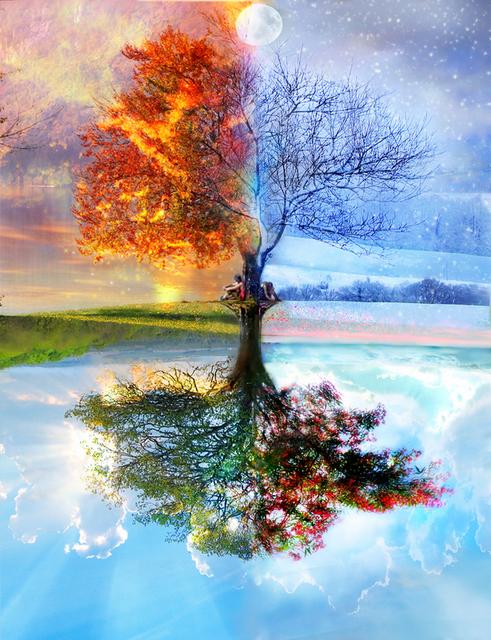 درخت چهار فصل